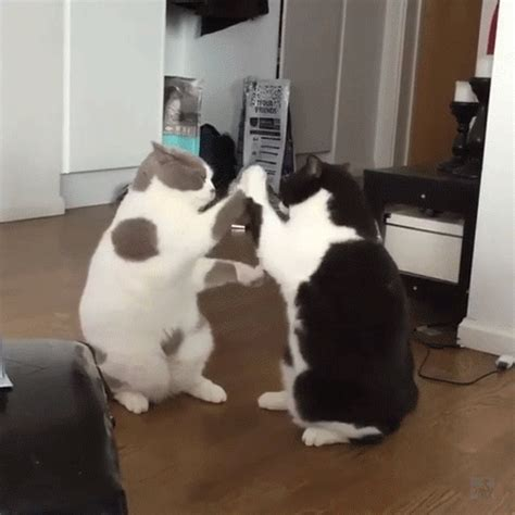 Funny Cat GIFs to Make You Smile