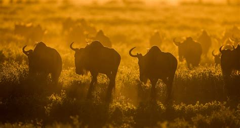 +255764415889 by WhatsApp | africanaturaltours2008@gmail