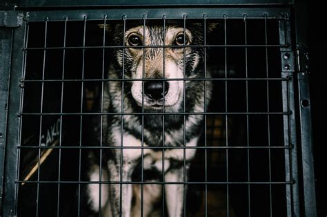 Animal Rights Uncompromised: Crating Dogs and Puppies   PETA