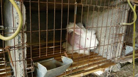 One Life in the Angora Wool Industry | PETA