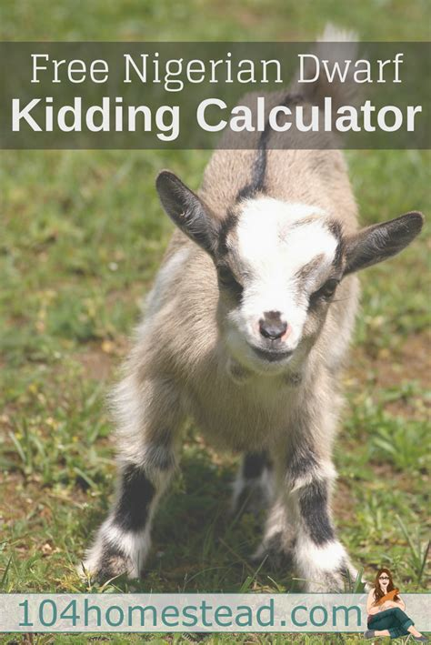 A free calculator for figuring out the estimated due date