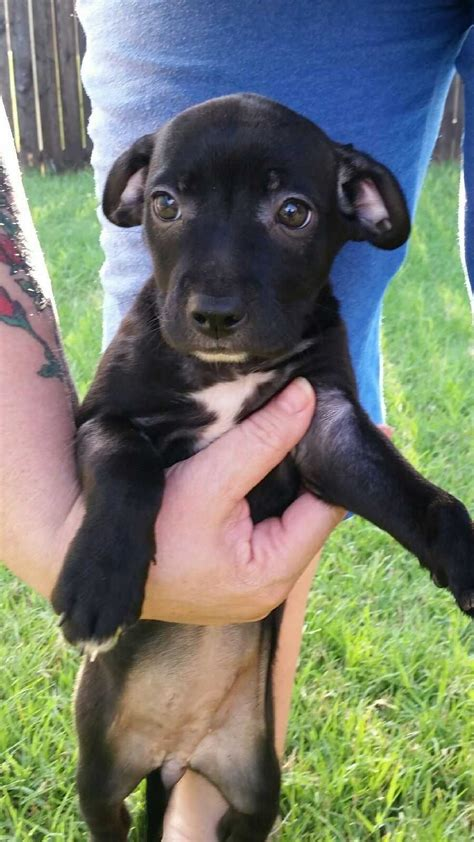 Lost and Found Pets around Oklahoma