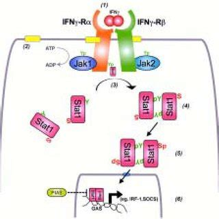 (PDF) Epithelial cell signaling responses to